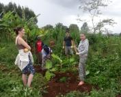 Banana Planting 2015